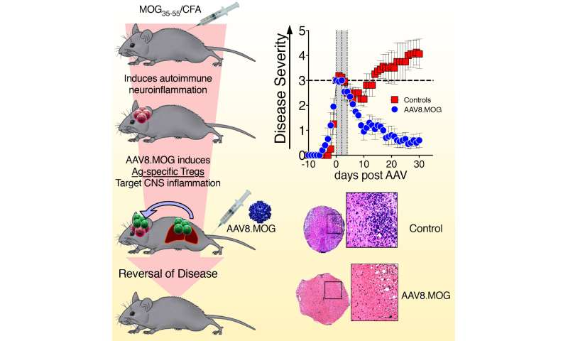 Gene immunotherapy protects against multiple sclerosis in mice