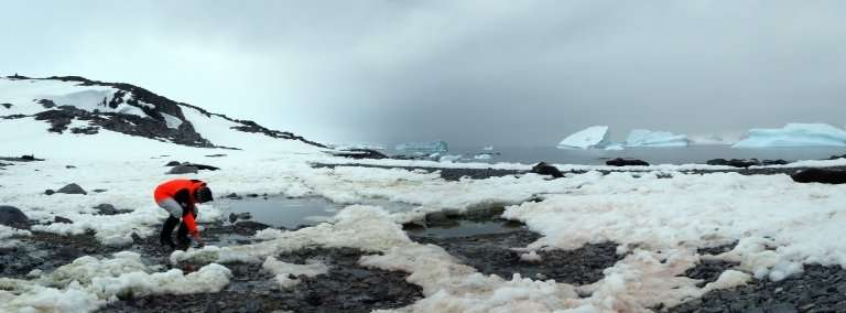 Geoscientists compare micro-organisms in the polar regions