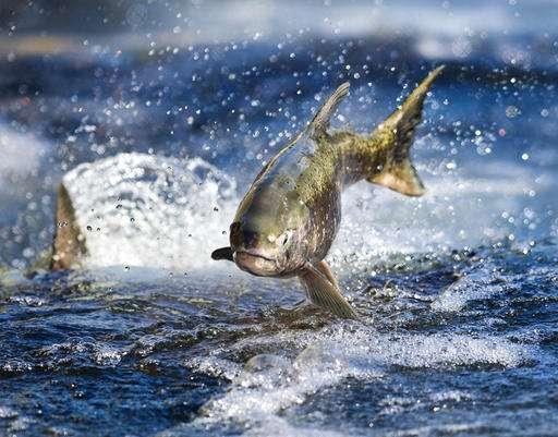 GOP targets landmark Endangered Species Act for big changes