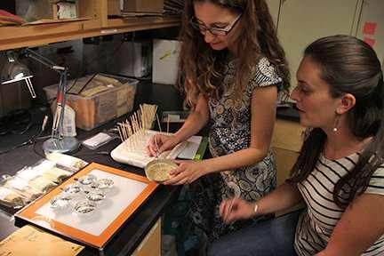 Great Basin seed study experiment targets rangeland restoration