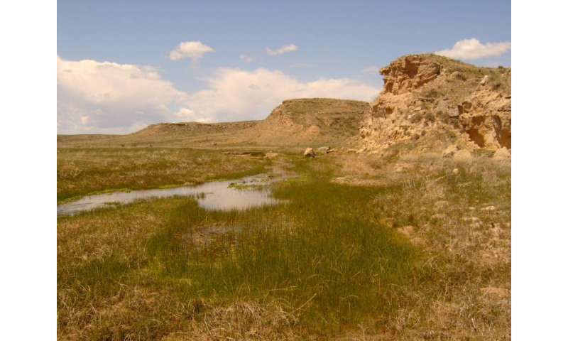 Groundwater pumping drying up Great Plains streams, driving fish extinctions