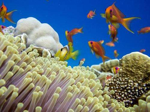 Helping corals to cope with pressure