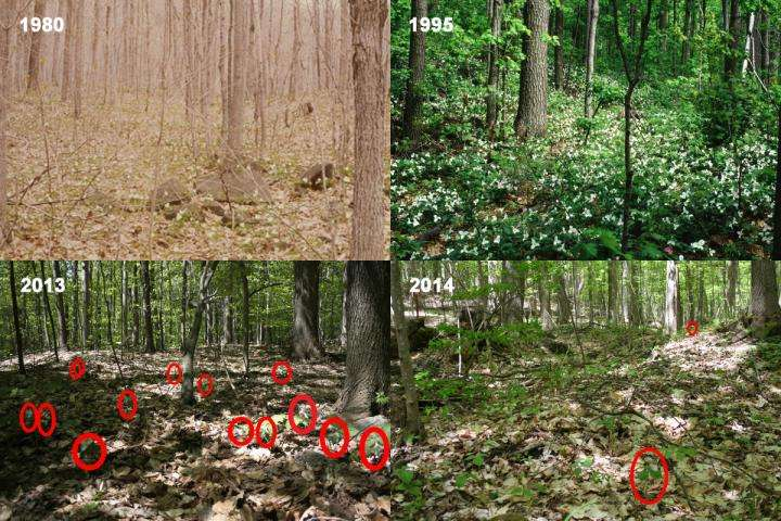 Herbaria prove valuable in demonstrating long-term changes in plant populations