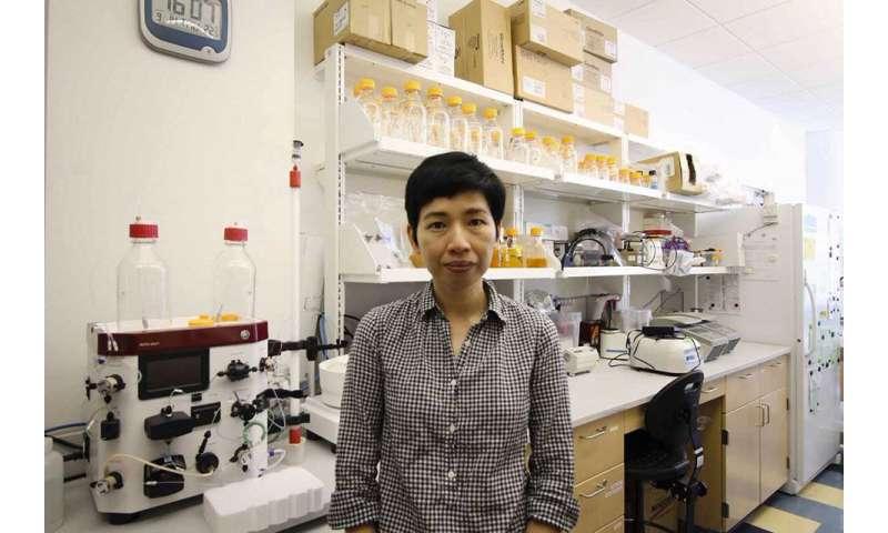 Hibernating ribosomes help bacteria survive