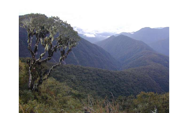 Hidden Inca treasure: Remarkable new tree genus discovered in the Andes