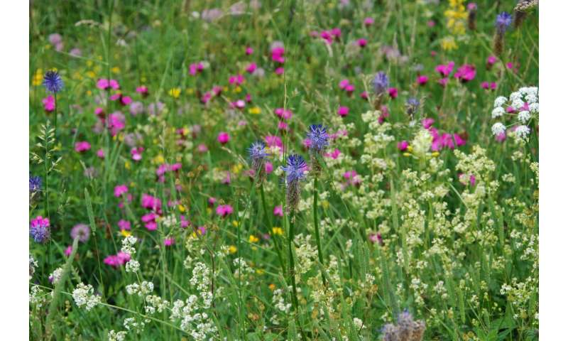Higher plant species richness may not be enough to protect ecosystems from the worst impacts of climate extremes