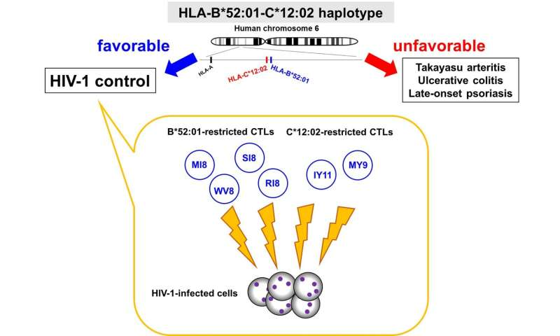 HIV-1 regulation via protective human leukocyte antigen (HLA) haplotypes