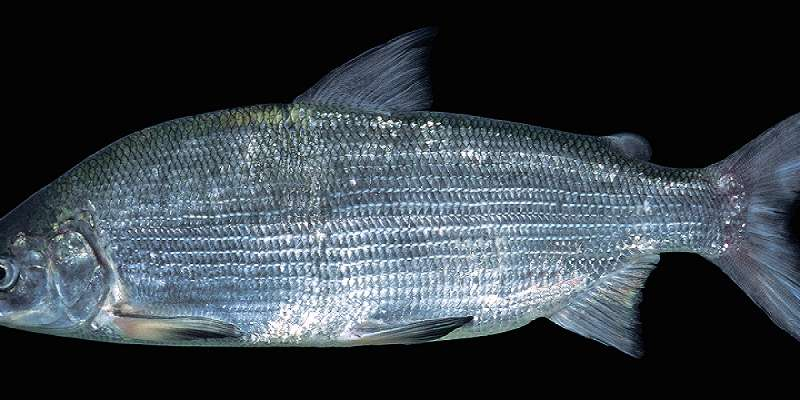 How have European freshwater fish species changed over time?