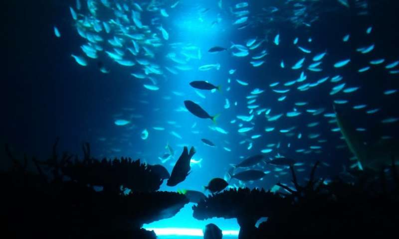 How many undiscovered creatures are there in the ocean?