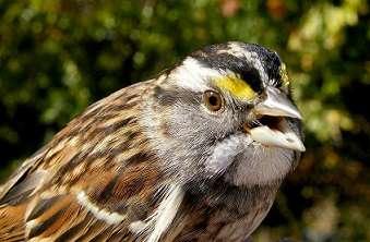 How migratory birds respond to balmier autumns?