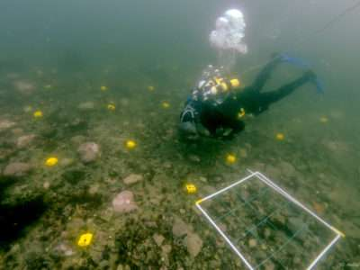 How much carbon can polar seafloor ecosystems store?