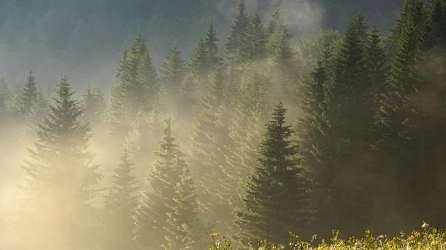 How our forests are adapting to climate change