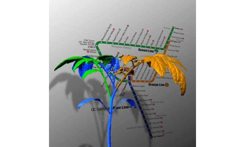 How plant architectures mimic subway networks