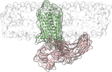 How proteins find one another