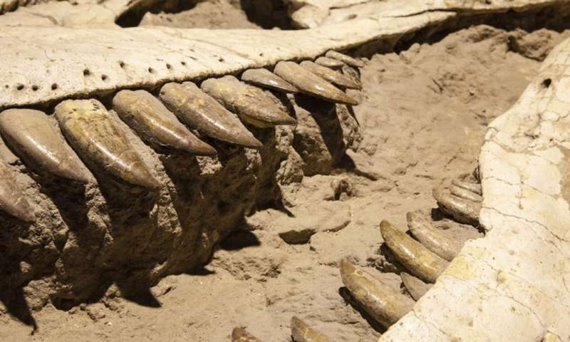 How some dinosaur discoveries might be wishful scientific thinking