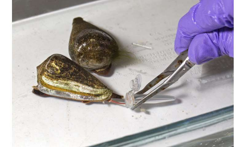 How the cone snail's deadly venom can help us build better medicines