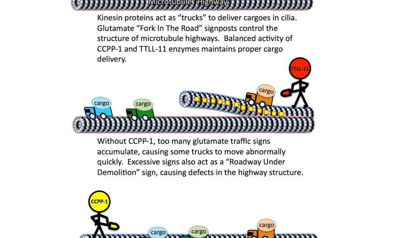 How to control traffic on cellular highways