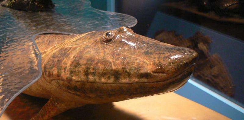How vision may have driven fishes onto land