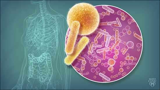 Human gut microbe may lead to treatment for multiple sclerosis