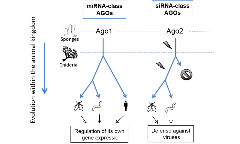 Humans no longer have ancient defence mechanism against viruses