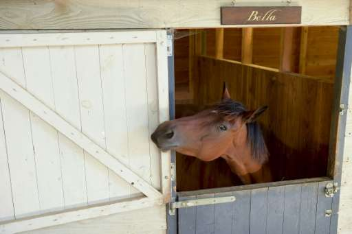 Hundreds of people visit the police horse sanctuary in Brantome, southern France, every year