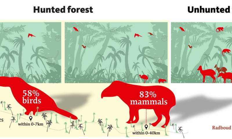 Hunting accounts for 83 and 58 percent declines in tropical mammal and bird populations
