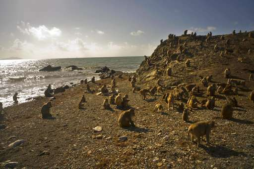 Hurricane mauled PR's renowned Monkey Island research center