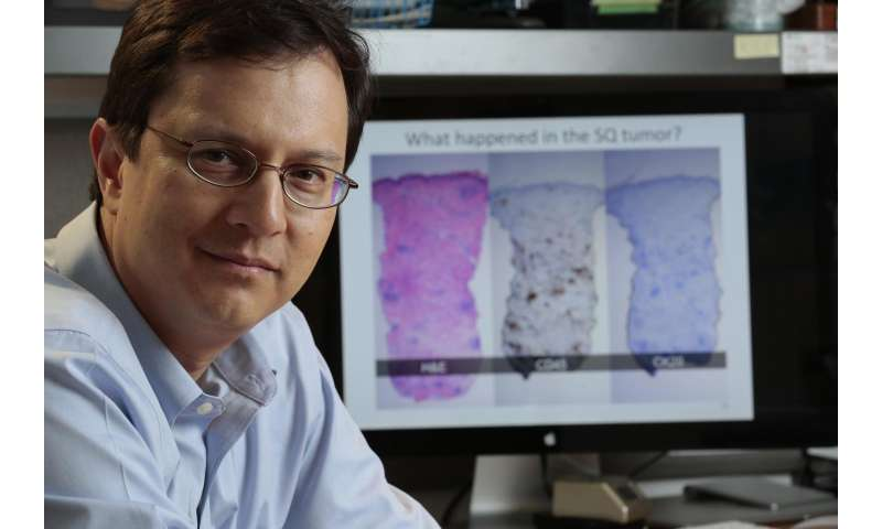 Immune responses against a virus-related skin cancer suggest ways to improve immunotherapy