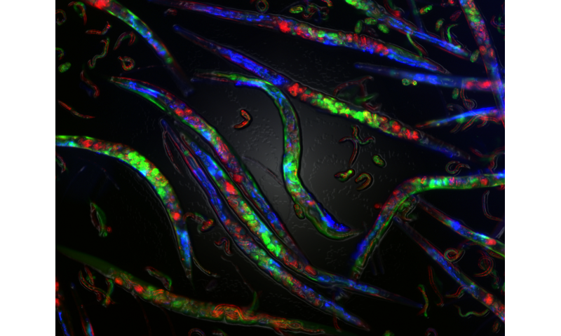 Impaired DNA replication can cause epigenetic changes inherited for several generations