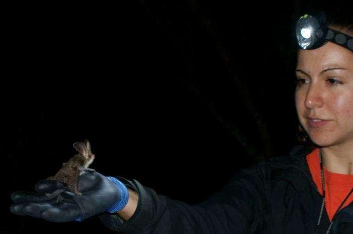 Improving habitats for bats