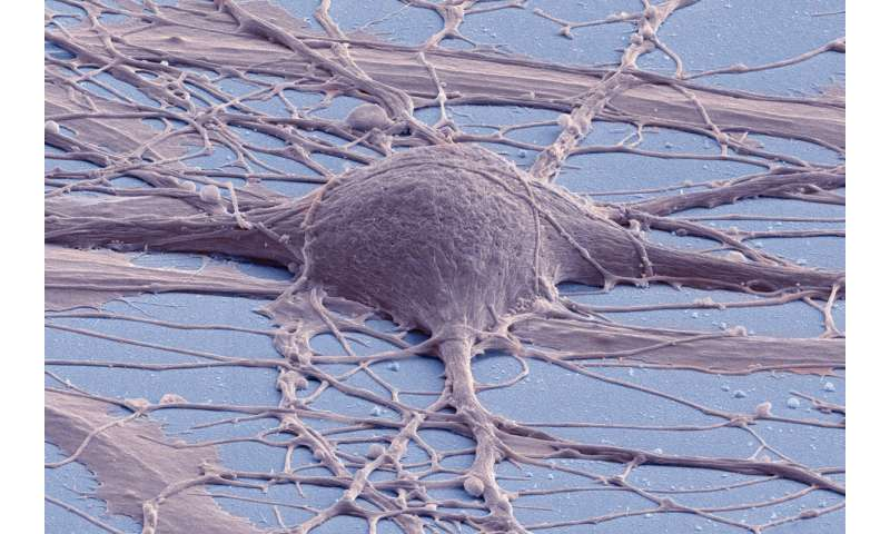 In 4 related papers, researchers describe new and improved tools for stem cell research