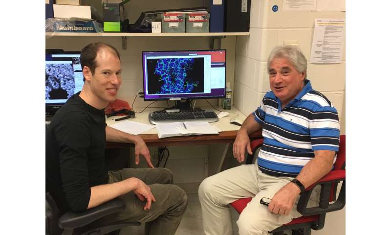Indestructible virus yields secret to creating incredibly durable materials