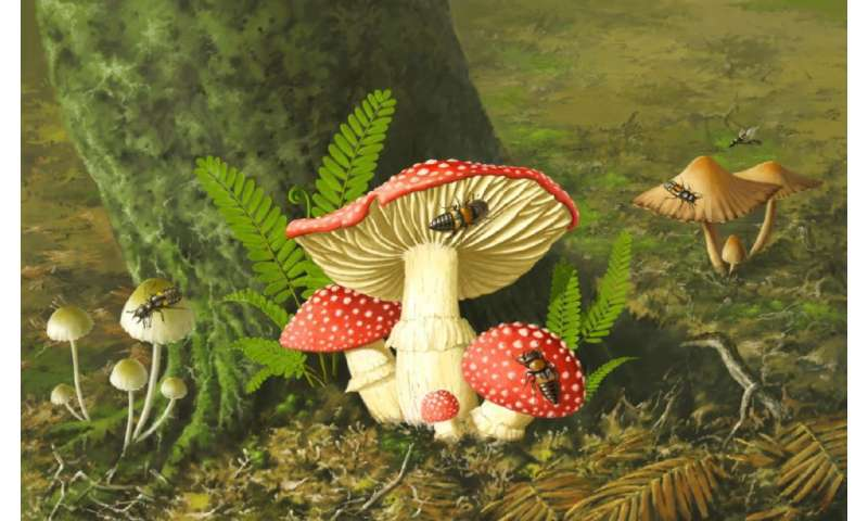 Intact mushroom and mycophagous rove beetle in Burmese amber leak early evolution of mushrooms