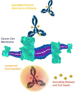 Investigation tests drug to activate immune system, help fight cancer