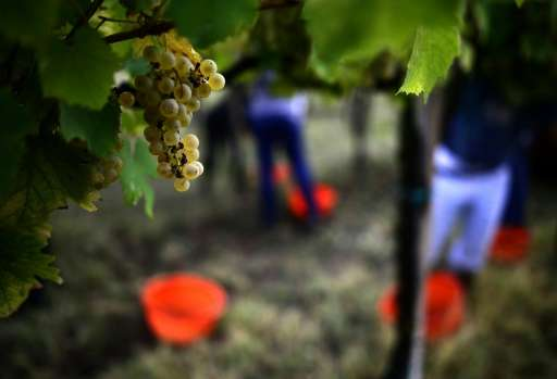 Italy's wine sector, which had sales of 10.5 billion euros in 2016 and employs some 1.3 million people, is currently one of the