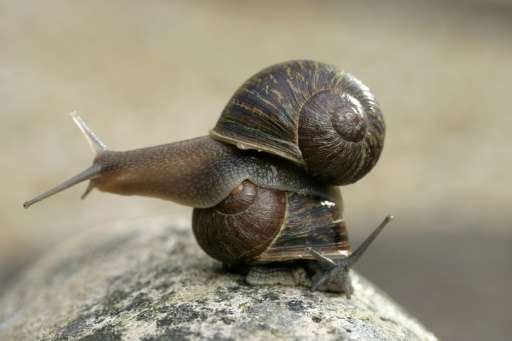 Jeremy the 'lefty' snail, has a shell whose spirals turn in an anti-clockwise direction, meaning that he cannot mate with the ma