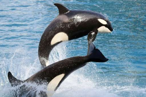 Killer whales, short-finned pilot whales and humans are the only species known to experience menopause