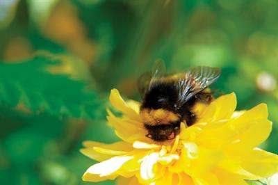 Knowledge is not always power when it comes to bumblebees
