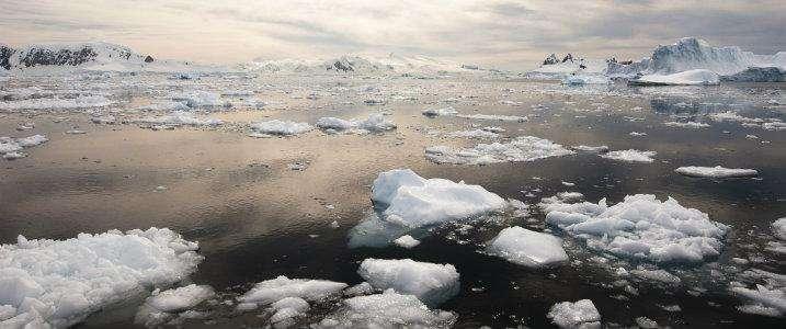 Krill hotspot fuels incredible biodiversity in Antarctic region