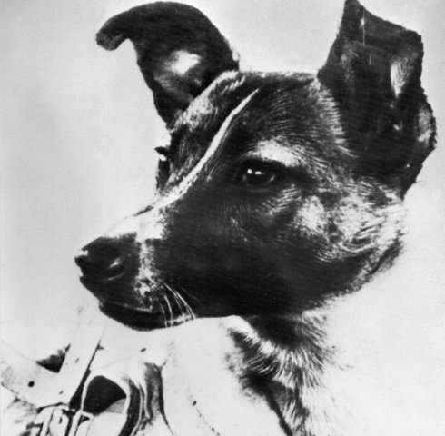 Laika, whose picture was published in the Soviet daily Pravda in 1957, preceded man in becoming the first living being sent in t