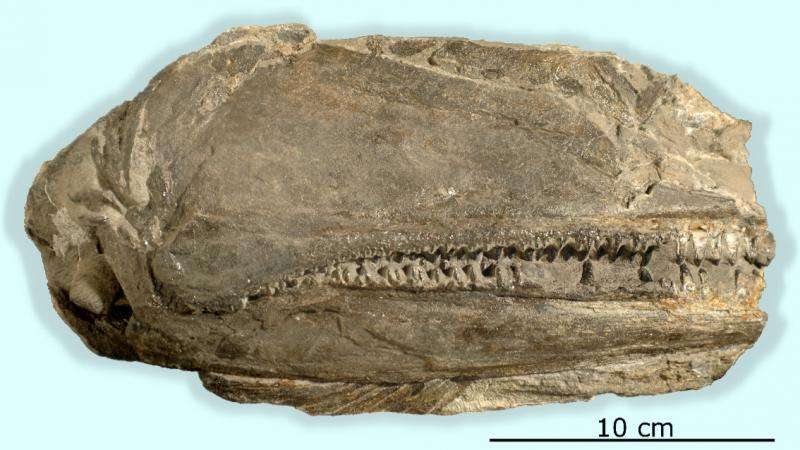 Large-mouthed fish was top predator after mass extinction