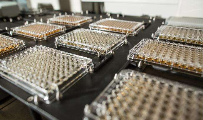 Large-scale study of adaptation in yeast could help explain the evolution of cancer