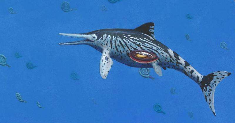 Largest Ichthyosaurus was pregnant mother, say palaeontologists