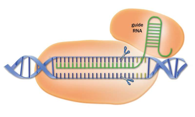 Library of CRISPR targeting sequences increases power of the gene-editing method