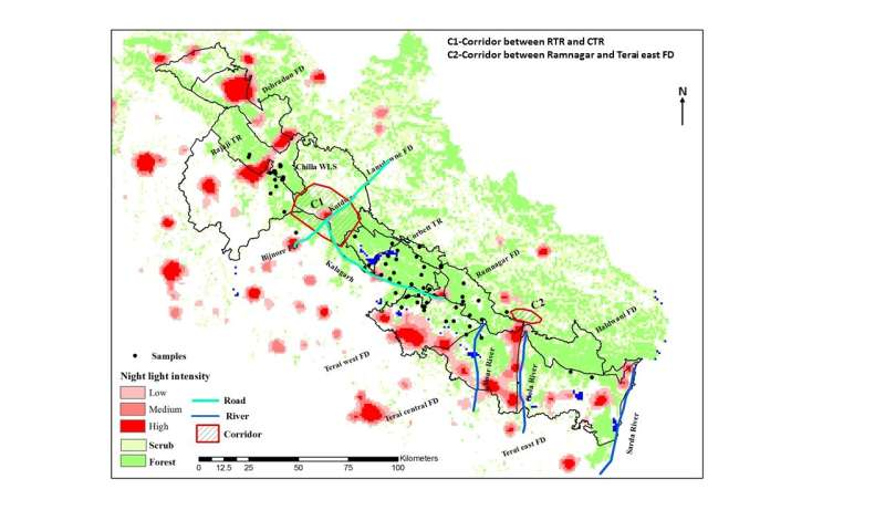 Limited gene flow between 2 Bengal tiger populations in the western Himalayan foothills