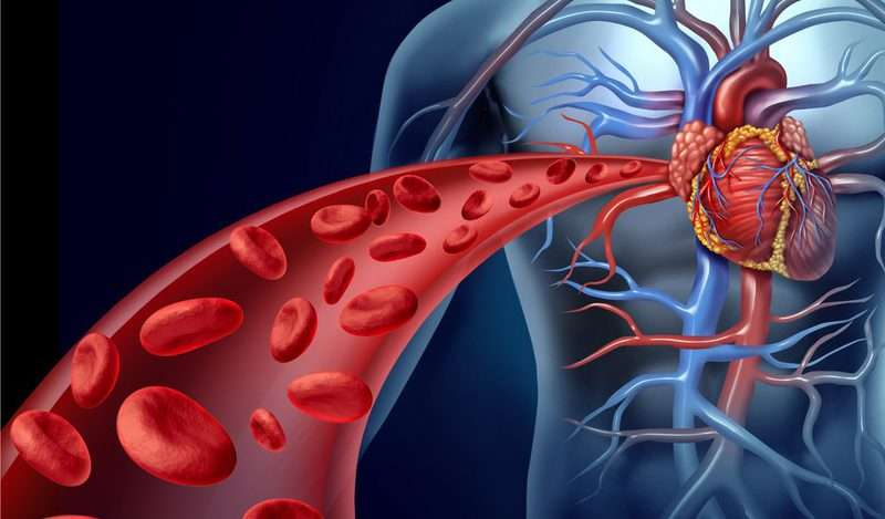 Limiting protein reduces post-heart attack injury in mice