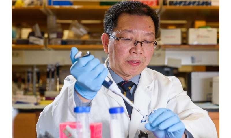 Liver tumor growth in mice slowed with new chemo-immunotherapy treatment