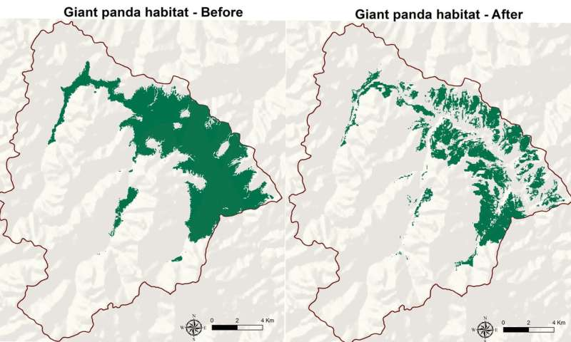 Livestock grazing harming giant panda habitat