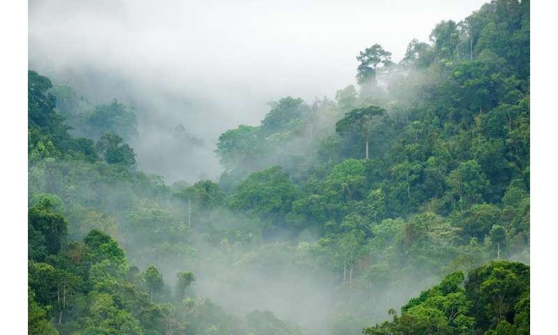 Long-term fate of tropical forests may not be as dire as believed, says CU Boulder study