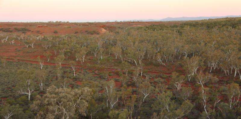 'Lost' forests found covering an area two-thirds the size of Australia